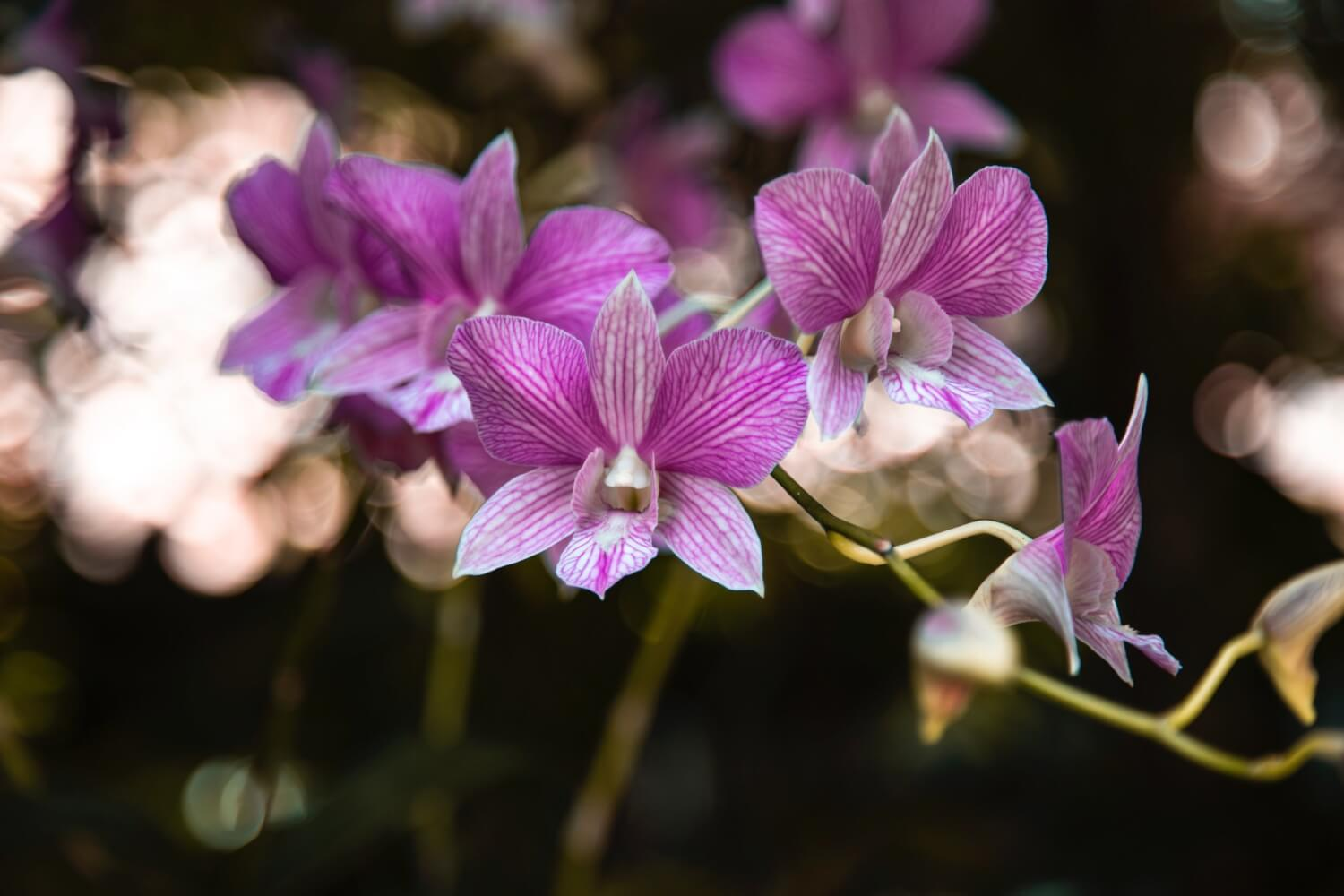 melissa: the orchid plant